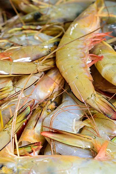 Fresh prawns are available all year round at Grunske's by the River in Bundaberg